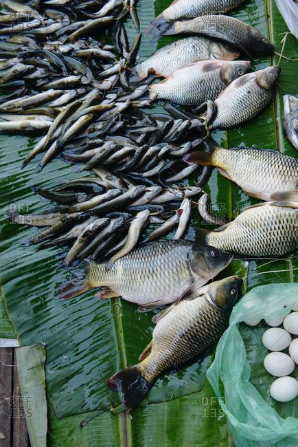 Still life of caught fish and eggs, Nyaung Shwe, Inle Lake, Burma