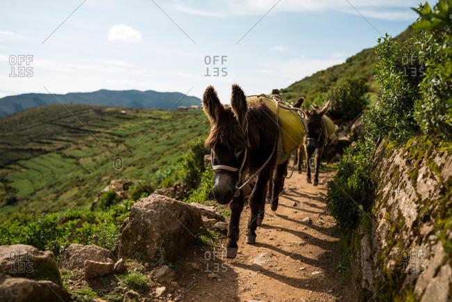 Donkeys on dirt path, Isla del Sol, Lake Titicaca, Bolivia, South America