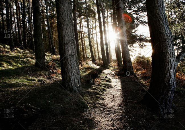 Path in forest with sunlight