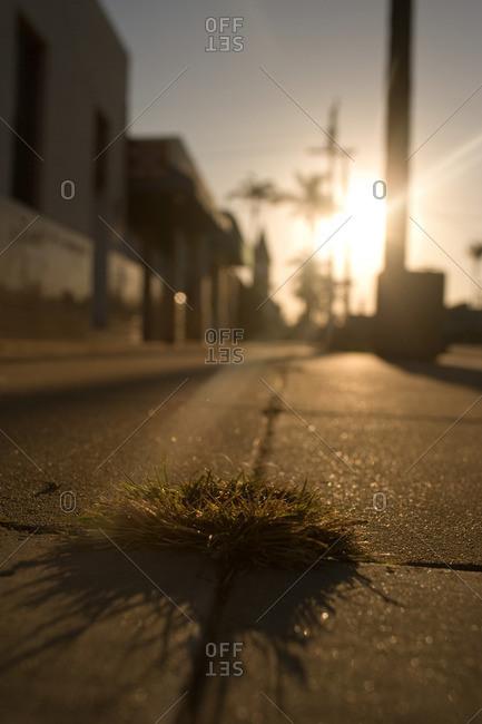 Grass growing in cracks in street