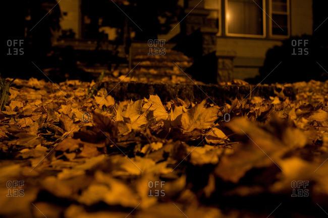 Autumn leaves on floor at night