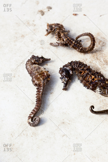 Three seahorses for sale at fish market in Marseille