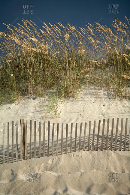 Sea grass in sand dunes, North Carolina, USA
