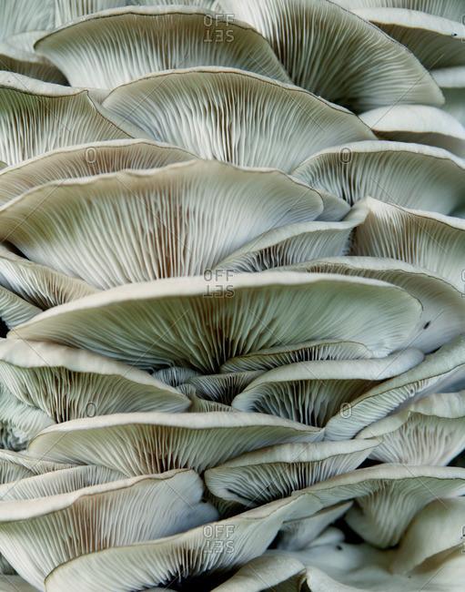White fungus, close up - Offset