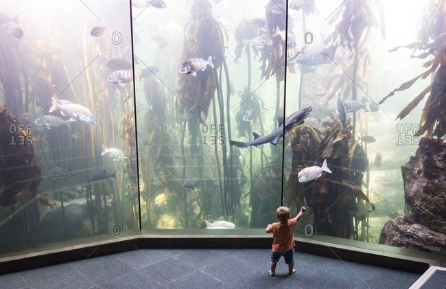 Boy in Waterfront Capetown aquarium
