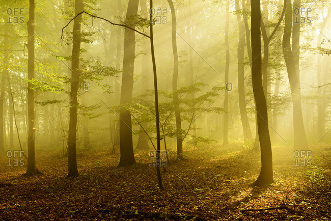 Sunlight beams over a forest