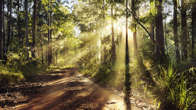 Sunlight trough forest