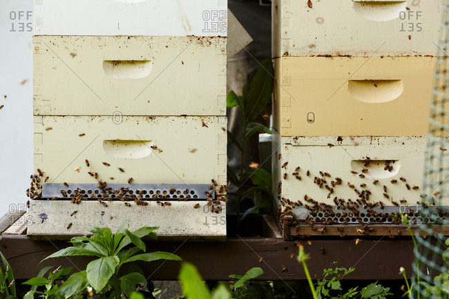 Bees on hive boxes