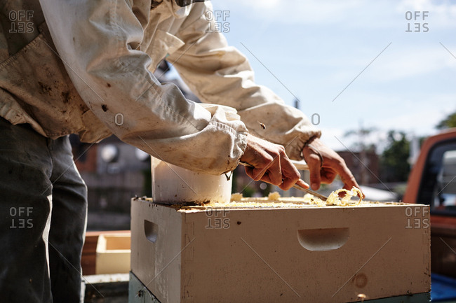 Hands harvesting beeswax