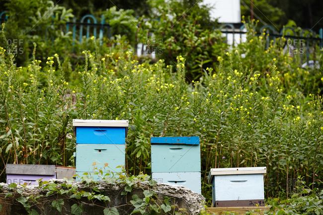 Bee hives in vegetation