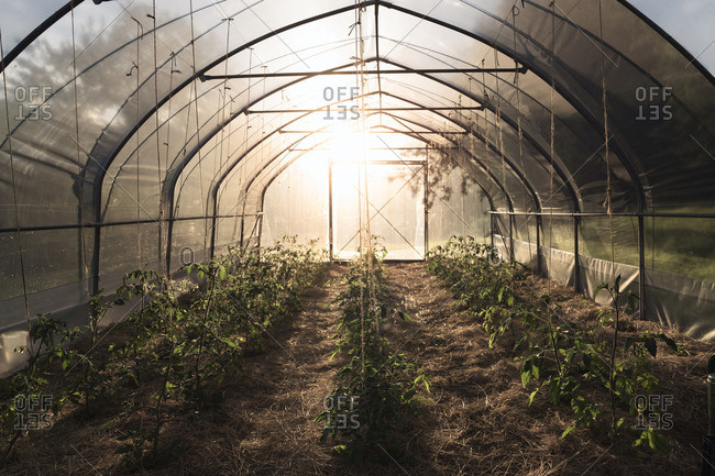 Plants growing in brightly lit greenhouse