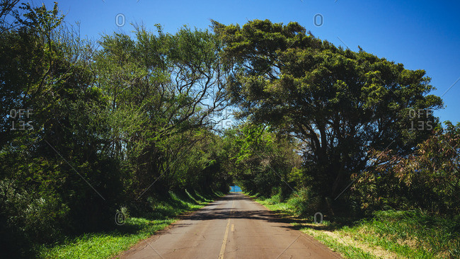 Highway lined by trees at Maui, Hawaii