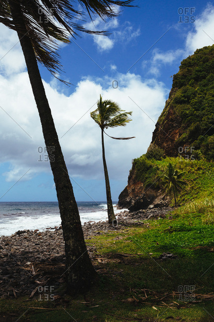 Palm trees on a rocky beach at Maui, Hawaii