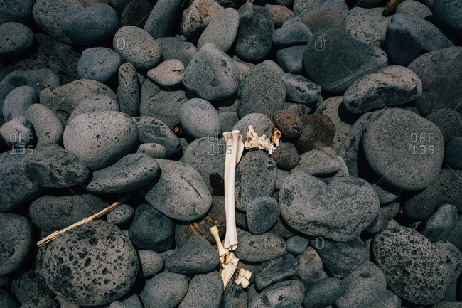 Animal bones on stones at a rocky beach