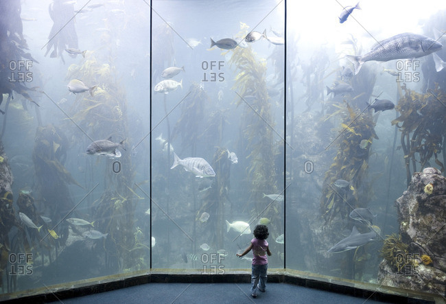 Cape Town, Western Cape, South Africa - November 19, 2009: A young child watches wildlife at The Two Oceans Aquarium located at the Victoria & Alfred Waterfront