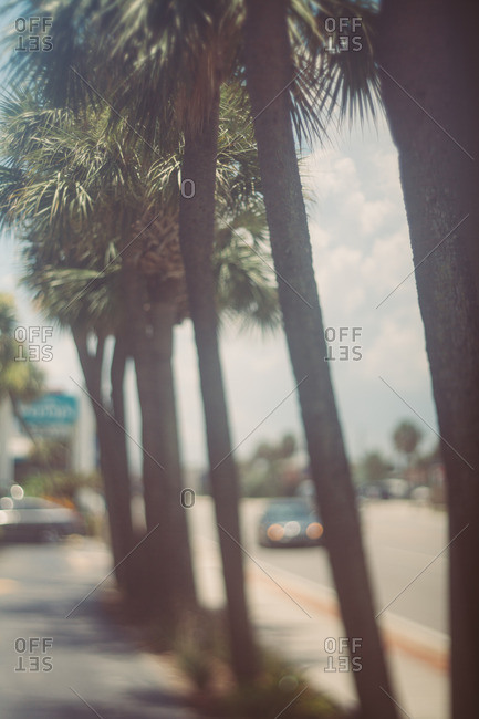 Sidewalk with palm trees in a tropical city