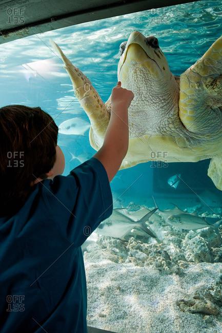 Boy pointing at sea turtle in aquarium
