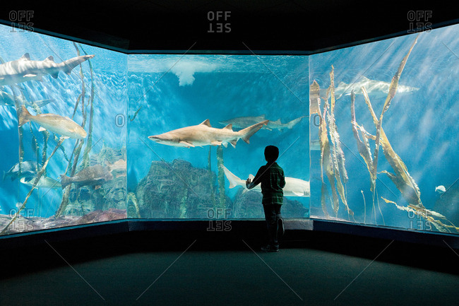Boy fascinated by sharks in aquarium