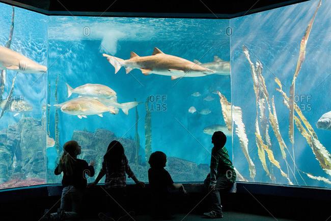 Children watching fish in aquarium