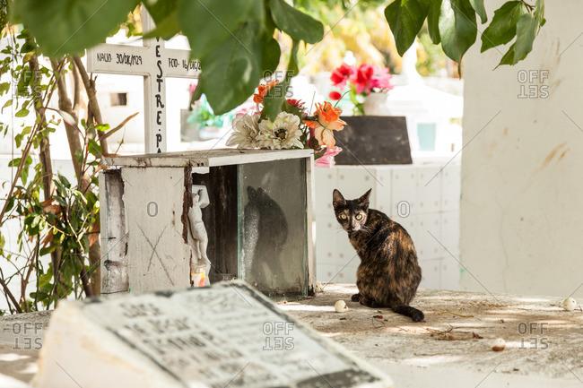 April 24, 2011: Cat at a grave, Mexico