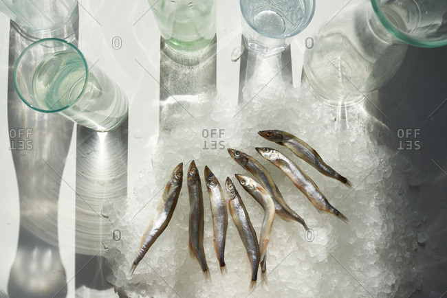 Row of herrings on ice among glasses