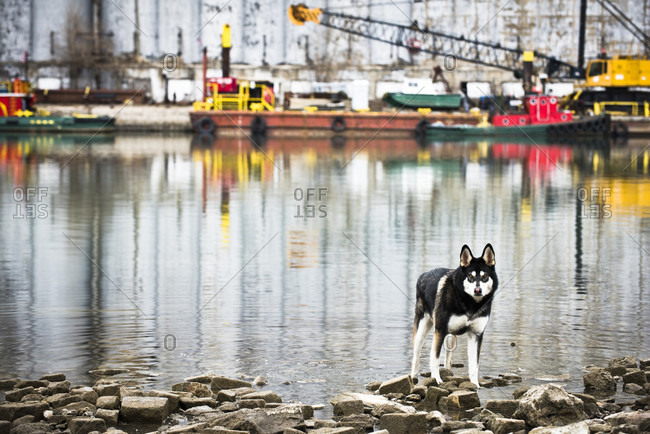 A dog stands in front of a body of water reflecting boats and an old factory in Buffalo, New York