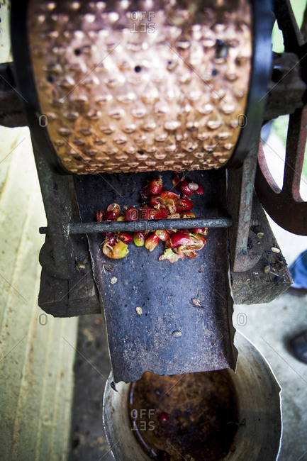 A coffee machine that removes the husks of the freshly picked coffee cherries