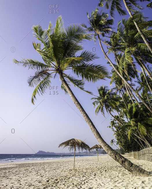 Palm trees and white sand along Ngapali beach