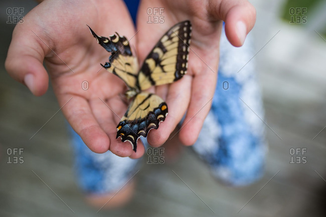Child's hands holding butterfly with broken wings