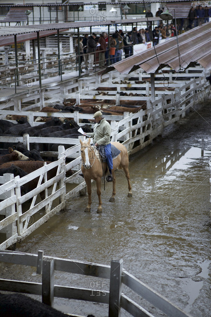 Buenos Aires, Argentina - May 31, 2016: Gaucho on horseback reads paperwork at livestock market, Buenos Aires