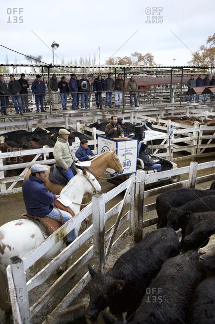 Buenos Aires, Argentina - May 31, 2016: Men at livestock auction in Mercado de Liniers, Buenos Aires