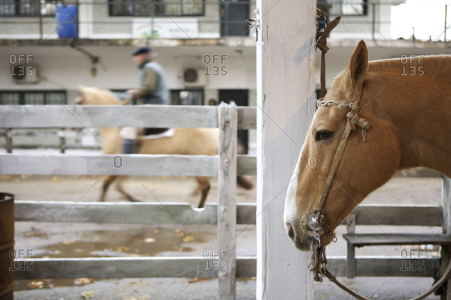 Horse in a corral at Liniers Cattle Market, Buenos Aires