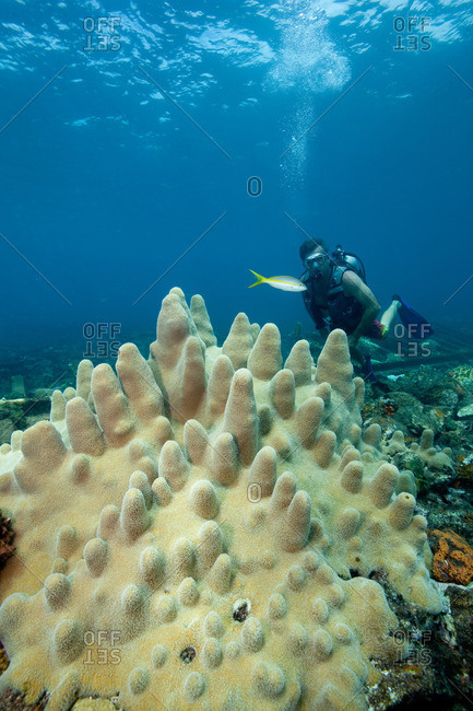 Diver on Coral Reef - Offset