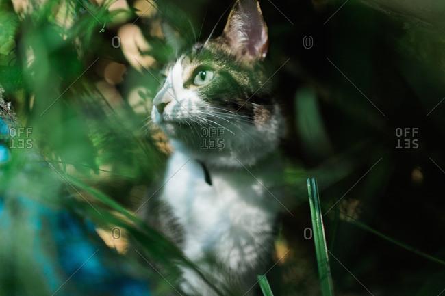 Portrait of cat among grass