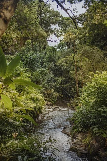 Stream through lush vegetation