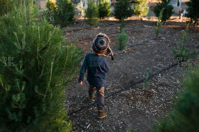 Child walking through rows of young trees at a tree farm
