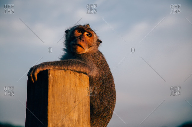 Monkey resting on a pillar