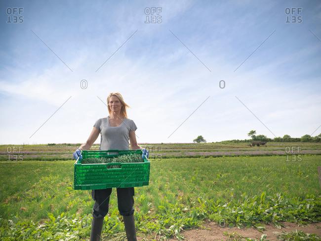 Female farm worker holding box of freshly cut chives on herb farm, portrait