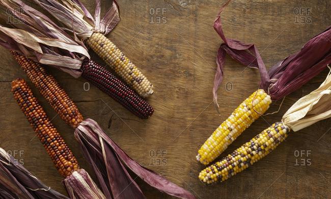 Flint corn, (Zea mays indurata), still life