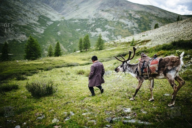 A Tsaatan man walks a reindeer from his herd down a steep mountainside in the East Taiga of northern Mongolia