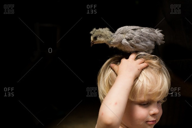 Boy with a baby chick on his head