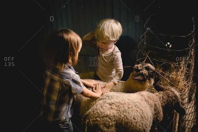 Toddler boy cousins petting sheep in a pen