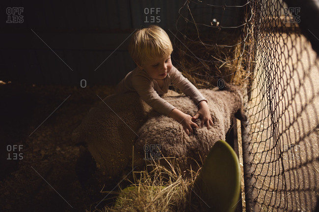Little boy hugging two sheep in a pen.