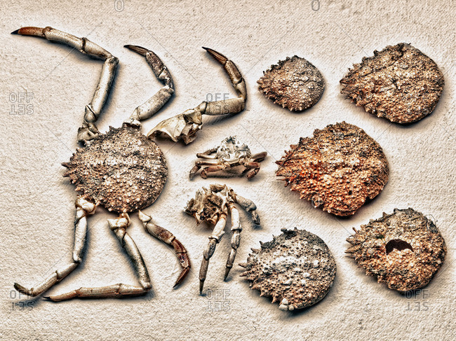 Pieces of crab shell