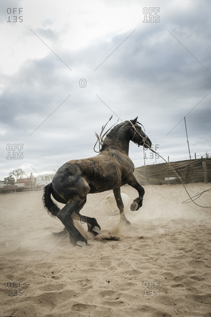 Horse playing in sand in corral