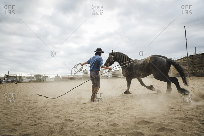Horse being trained by cowboy in corral