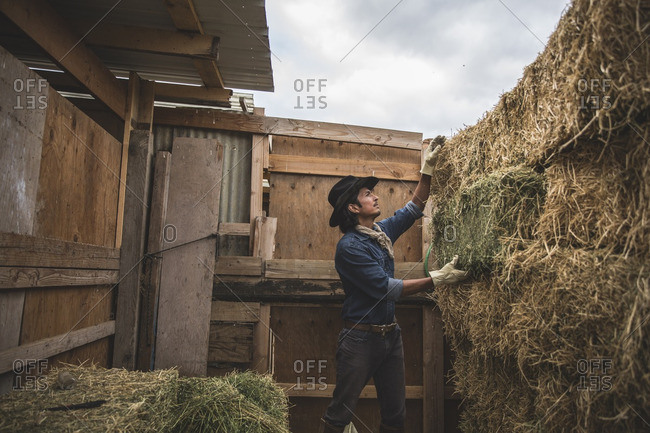 Cowboy stacking bales of hay at stable