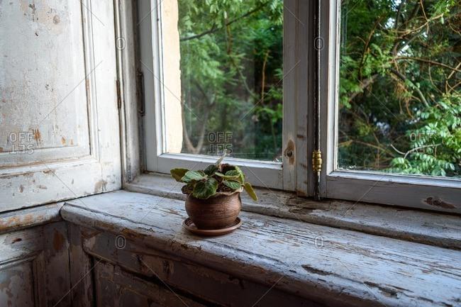 Plant on weathered windowsill