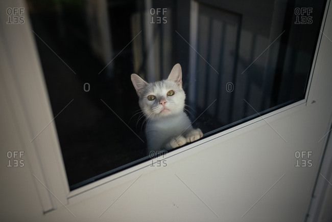 White cat looking through a screen door