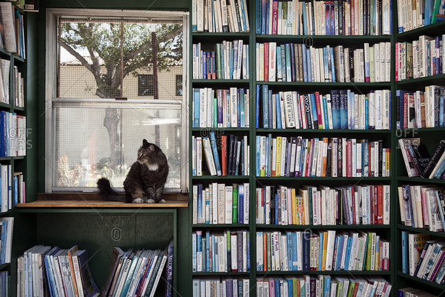 March 31, 2015: Cat sitting in window of an outdoor bookstore